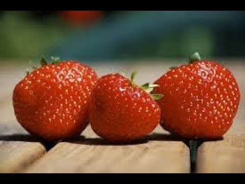 tuto jardinage fraises comment faire un semis frai doovi. Black Bedroom Furniture Sets. Home Design Ideas