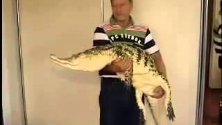 Двухметровый крокодил Гена живёт дома вместо кошки!