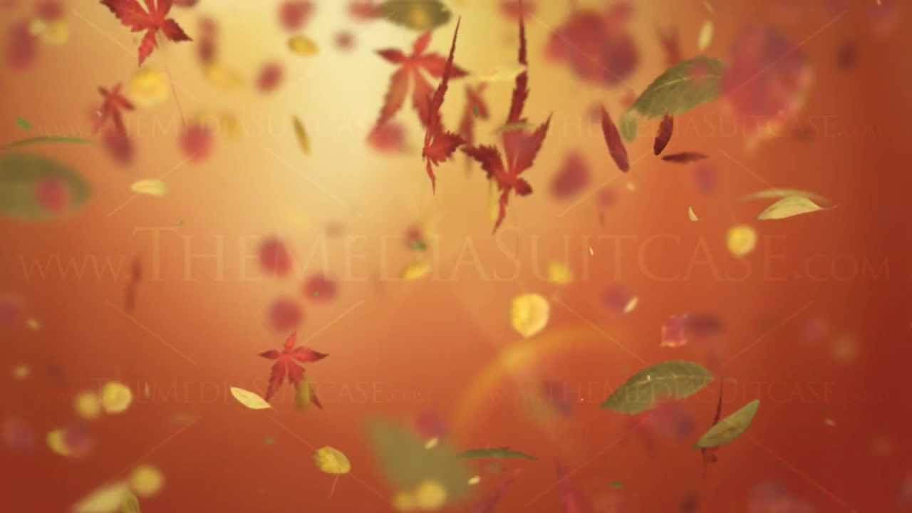 Fall Leaves Wallpaper Powerpoint Background Falling Autumn Leaves Background Loop Orange Youtube