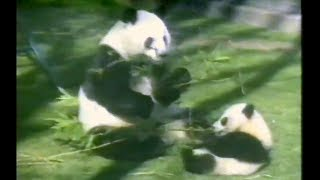 London Zoo 1991