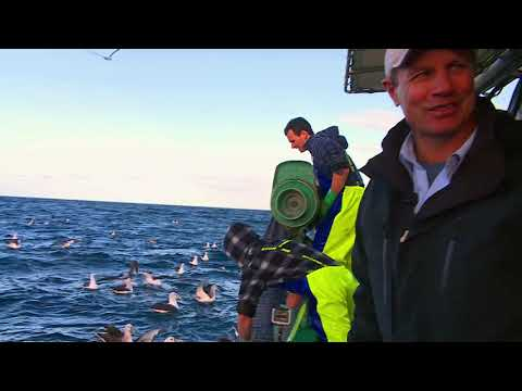 Seafood Escape With ET: Lakes Entrance Whiting , S1E3, Fishing Clip #1
