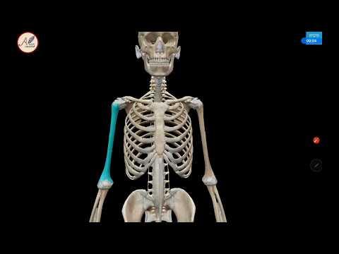 Rangka merupakan bagian tubuh yang sangat penting. Banyak sekali fungsi daripada rangka pada tubuh k.