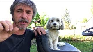Train Dog Hold,  King Tut Dog Gets Success with Service Dog Training