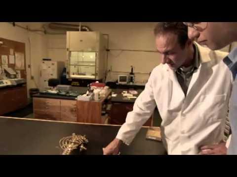 NOVA scienceNOW : 5 - Trex
