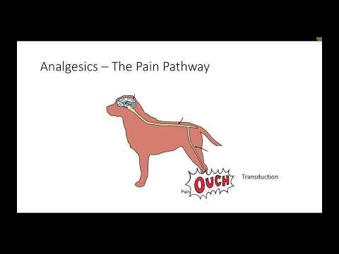 Veterinary Analgesics (VETERINARY TECHNICIAN EDUCATION)