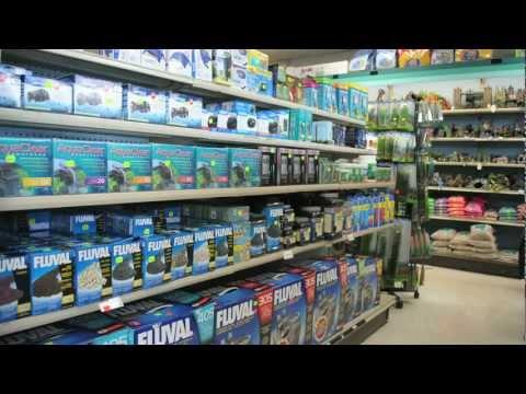 Elmer's Aquarium Store Tour