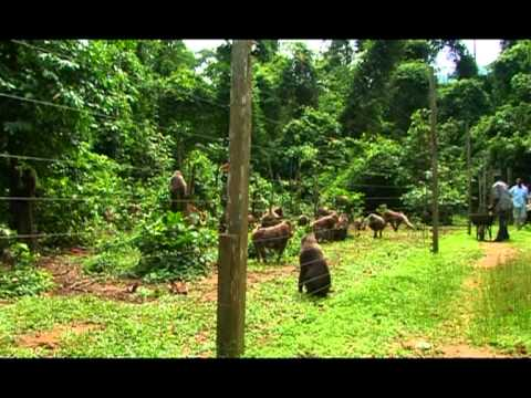 Cross River State of Nigeria: Africa Rediscovered - Part 1