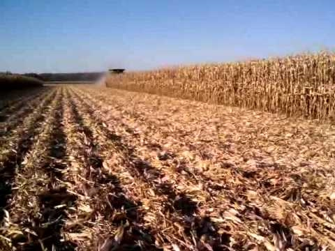 Harvesting twin row corn with stalk stompers