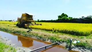 Ladang Kontrak Bernas Sg.baru, Kedah