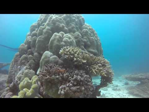 Diving at Joker Reef, Seychelles, Mahe