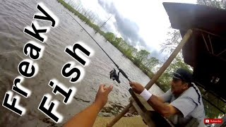 Crazy Fight! Freaky Fish! Bank Fishing For A Monster Again! Crappie Fishermen! @itsacrappielife
