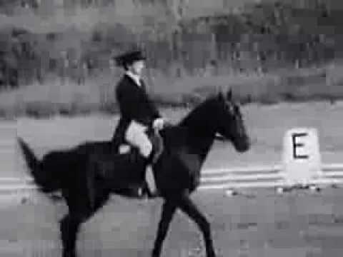 видео: Манежная езда в конном троеборье
