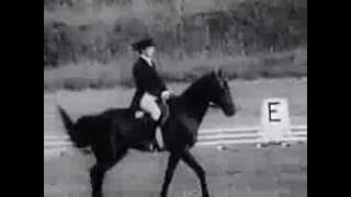 Манежная езда в конном троеборье