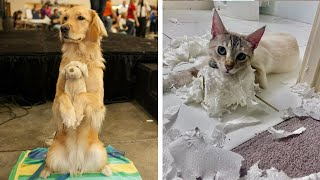 Funniest Animals Ever 🤣 Awesome Funny Moment Of The Animals #13