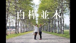 十勝牧場「白樺並木」が壮観すぎた!@北海道音更町 White birch road at Tokachi farm Otofuke, Hokkaido