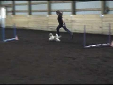 Peanut's Jumpers Run 6-3-07