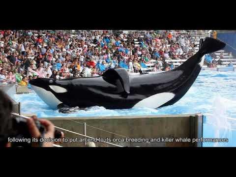 sec-finds-seaworld-mislead-investors-after-blackfish-killed-park-attendance
