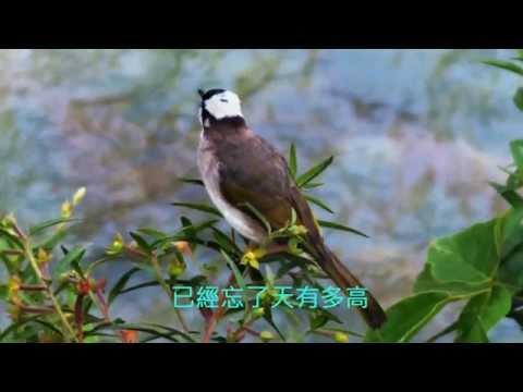 音樂磁場- 囚鳥,  Taiwan