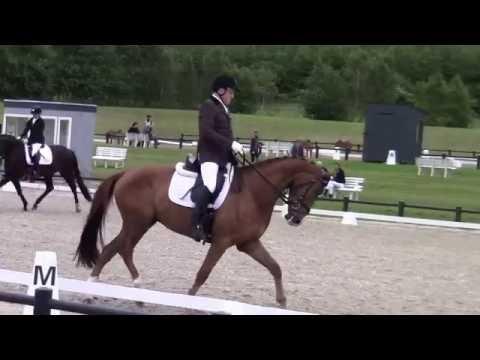 Stagsted's Omberto Aalborg 4 års championat 25 06 16