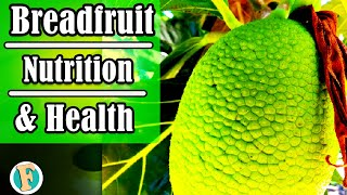Breadfruit | Facts – Nutrition - and health benefits | Fancied Facts
