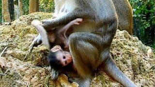 OMG !! MOM ANNA STILL DO HURT ON ALBA , BABY CRY TOO MUCH || SO PITY .