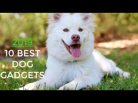 best-dog-gadgets-in-2019---part-1- -gadgets