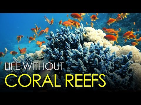 What will happen if all the corals on planet Earth died?