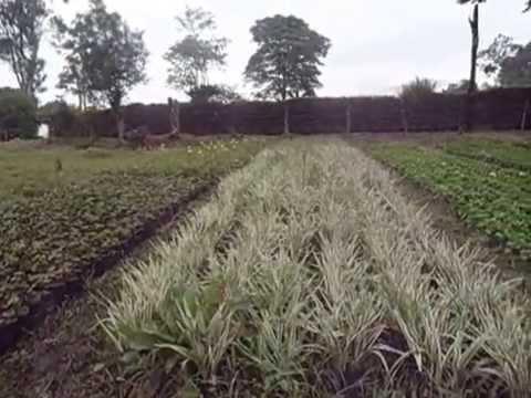 Viveros angol c b empresa de viveros para jardiner - Viveros bermejo ...