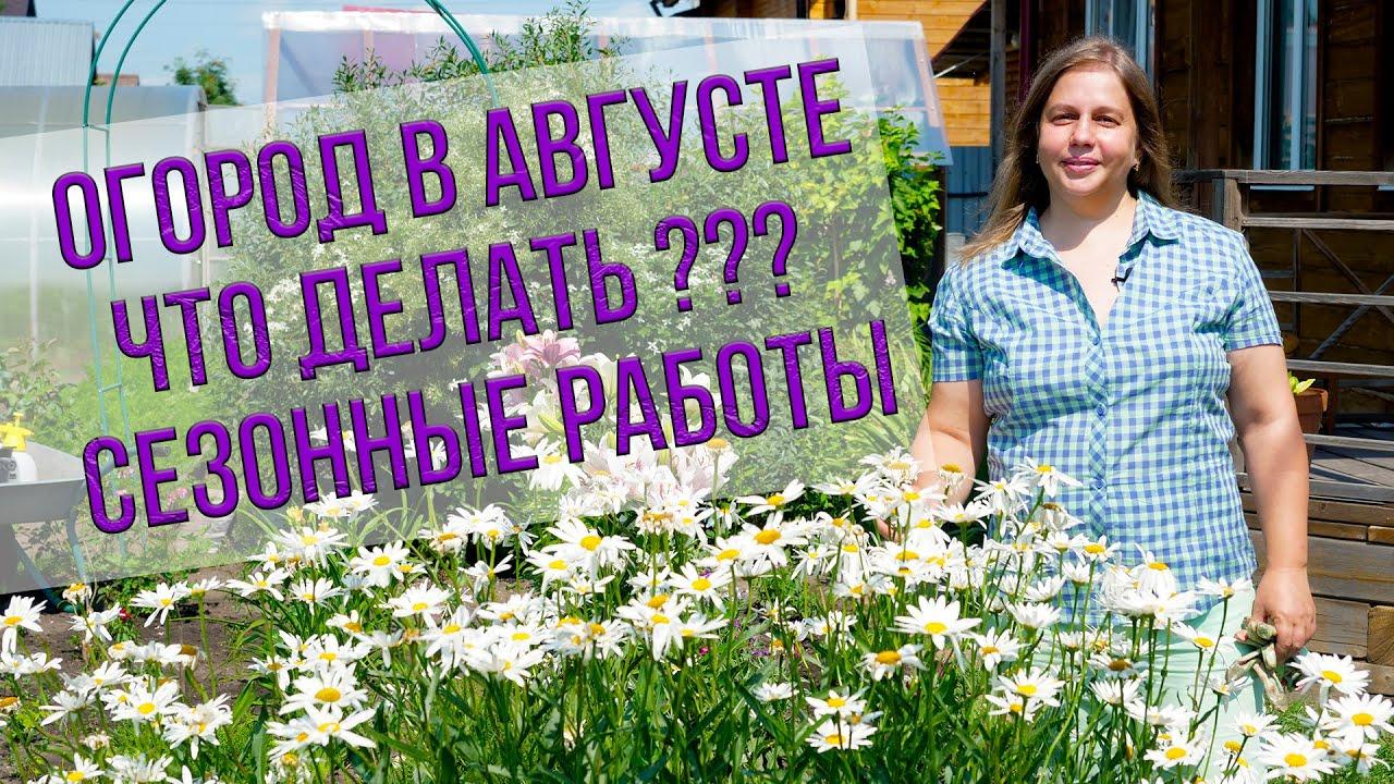 Огород в августе: сезонные работы