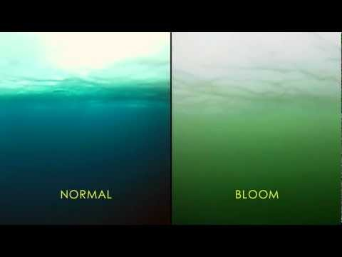 NASA | Massive Phytoplankton Bloom Discovered Under Arctic Sea Ice