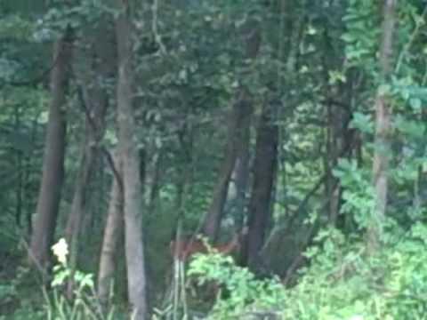 Mine Run Deer