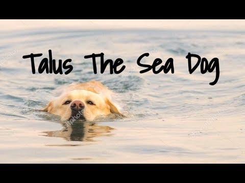 Talus The Sea Dog - Children's Bedtime Story/Meditation