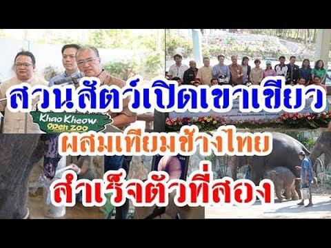 ผสมเทียมช้างไทยสำเร็จแล้วเป็นตัวที่ 2 ของประเทศ