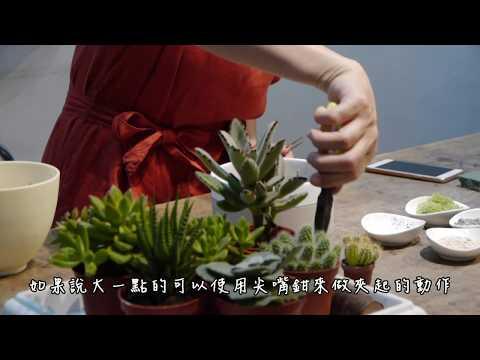 【第一堂園藝課】- 多肉植物