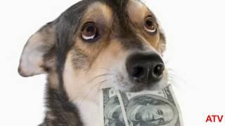 Анекдоты про Чухчу ,Путина и Умную Собаку !