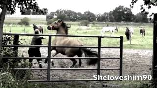 bucking horse 1 + best Falls and Fails