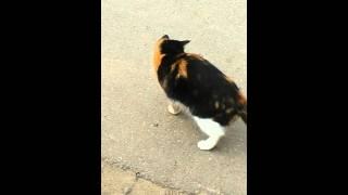 Лягушка и кошка