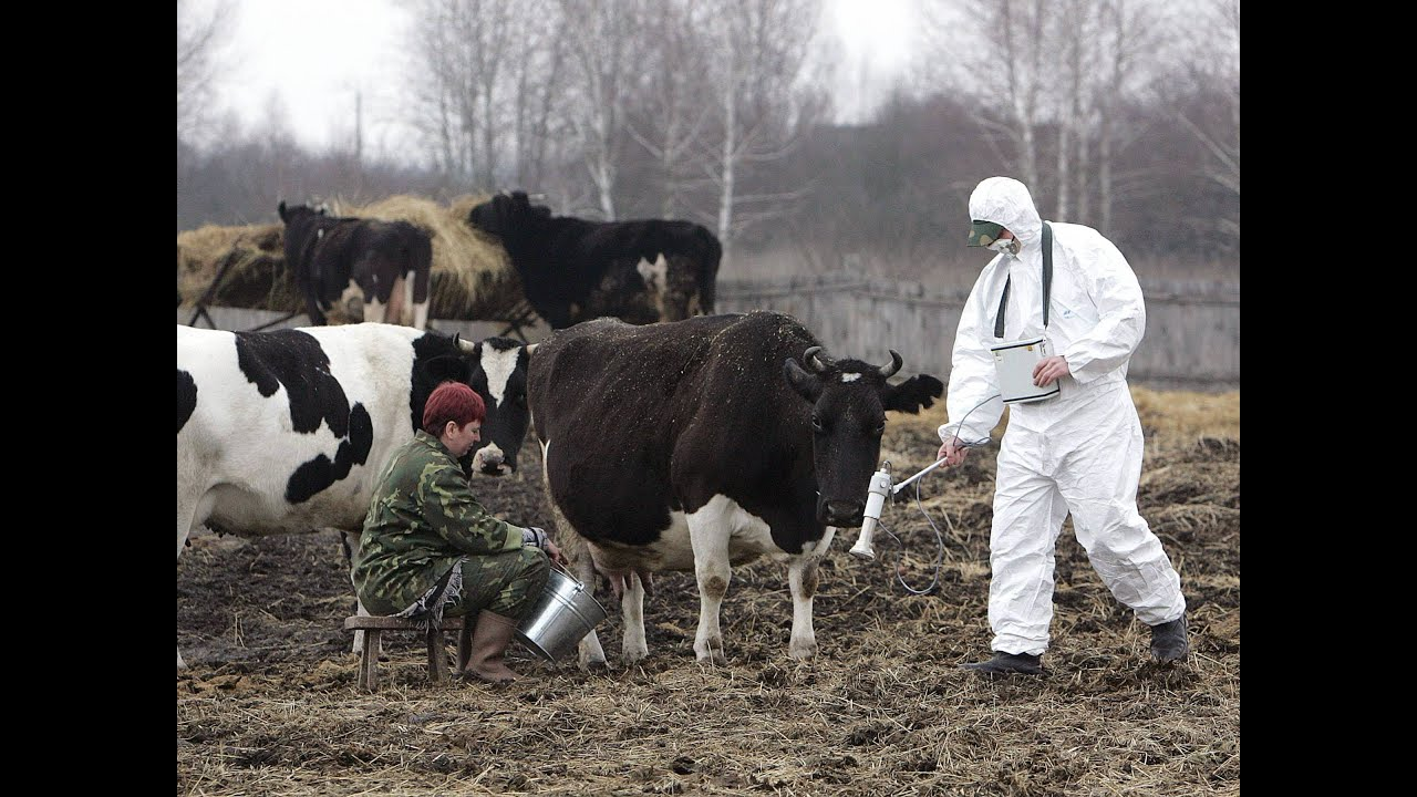 Chernobyl nuclear disaster has created radioactive animals ...