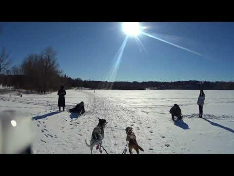 2018-02-04 Skijor-2 dog race with Comet Pasha