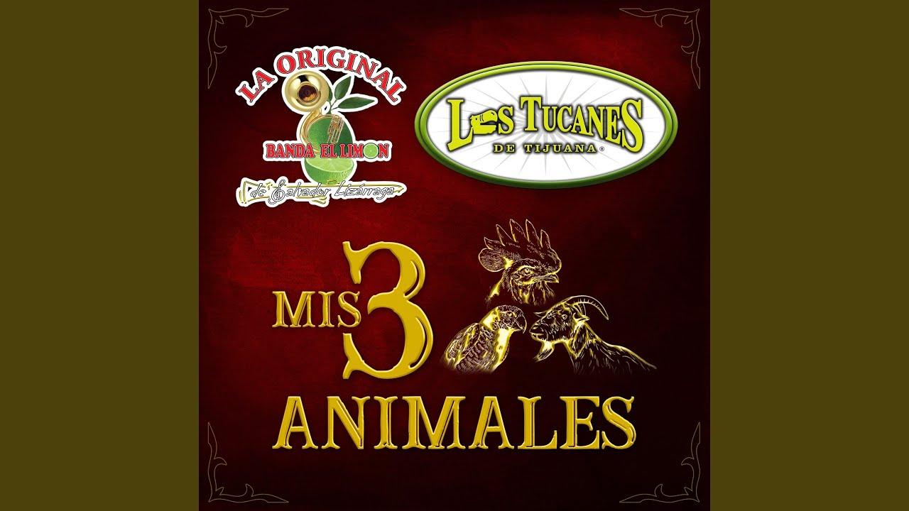 Mis 3 Animales
