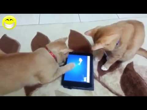 Funny Cat   Funny Cats Video   Funny cats Compilation 2016   Best Funny Videos #1