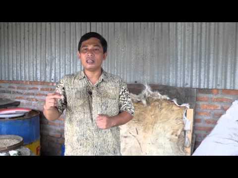 21. Pembuatan Pakan Ternak