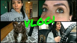 VLOG: April 5th-15th   Microblading, Dog Grooming, & Health Scares