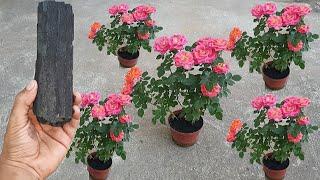 Quer Fazer Sua Plantar Florir Veja Esse Vídeo