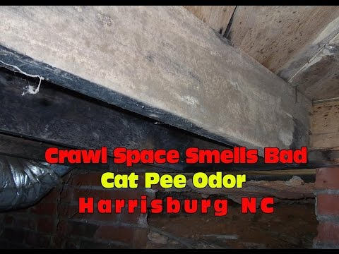 Crawl Space Smells Bad Cat Pee Odor Harrisburg NC |704.787.6972 | Masserang Consulting