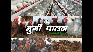 Poultry Farming (मुर्गी पालन)