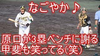 3塁ベンチにファールボールが飛び込み謝る原口 甲斐キャノンも笑ってる(笑) なごやかな光景