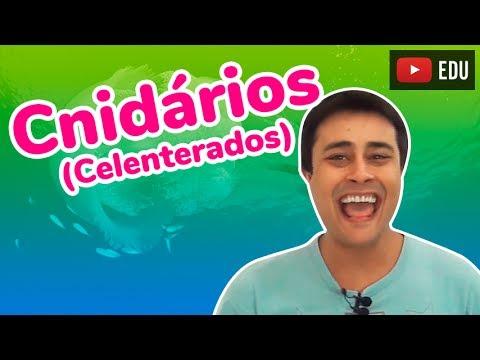 Cnidários (Celenterados) - Reino Animalia (Zoologia) - Prof. Paulo Jubilut
