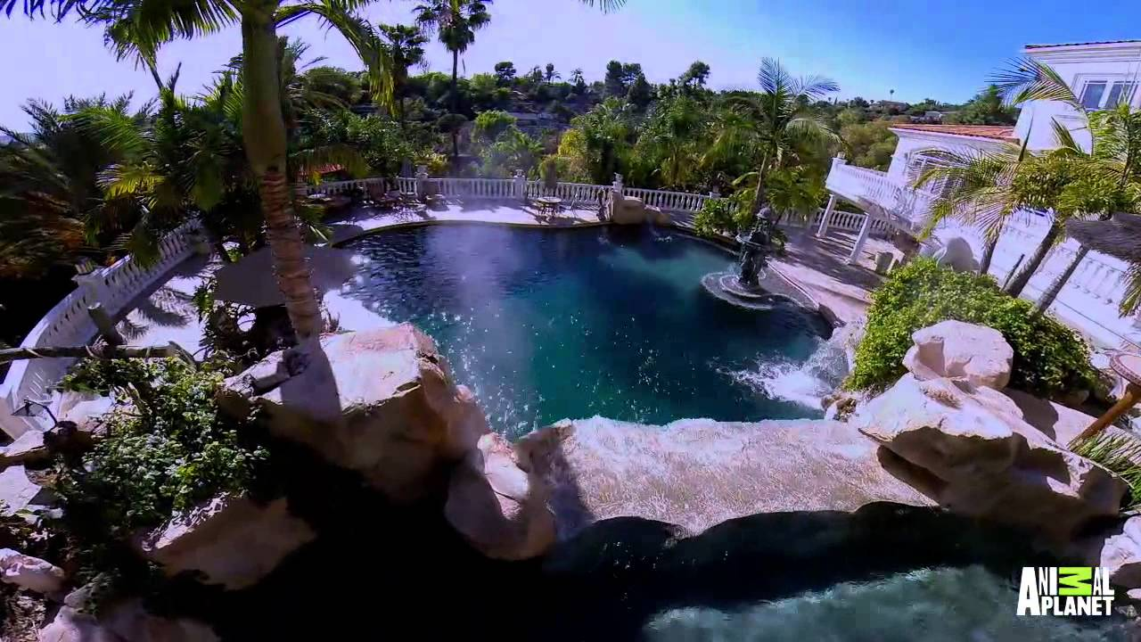 This pool has a secret the pool master for Pool show on animal planet