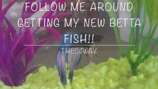 Follow Me Around Vlog: Getting My New Betta Fish! Thumbnail